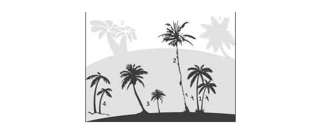 brush photoshop Palm Trees